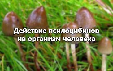Как псилоцибиновые грибы действуют